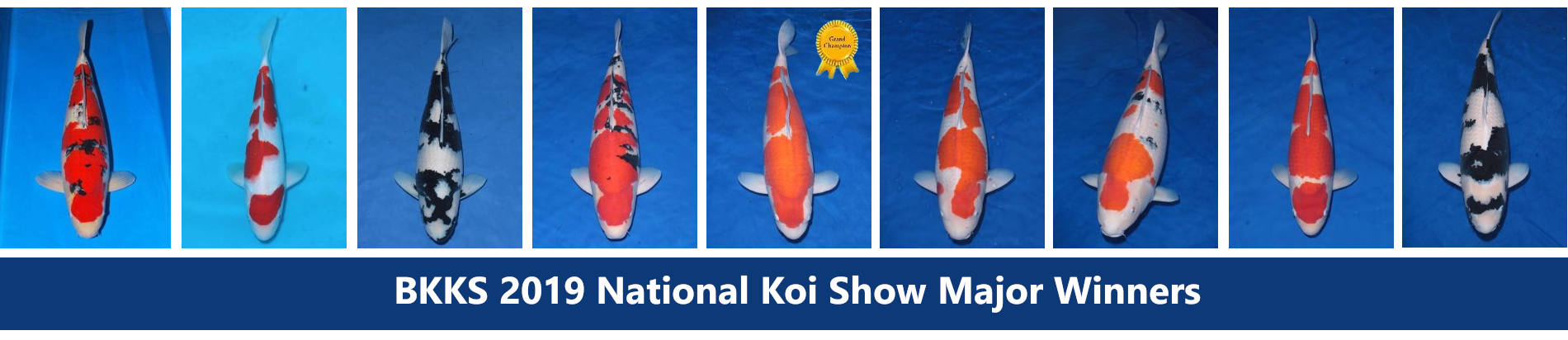 British Koi Show Winners 2019